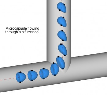 Microcapsule flowing through a bifurcation