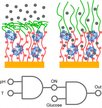 Responsive nanostructured biosensors for the design of biocatalytic gates.