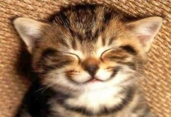 This cat is happy that he can contribute to science and possibly get his name on a paper (photobucket.com).