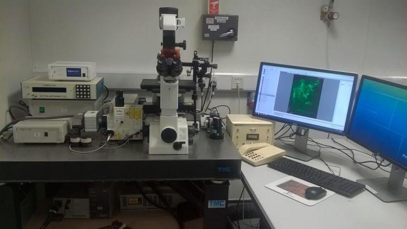 Confocal And Super Resolution Microscopy Facility School