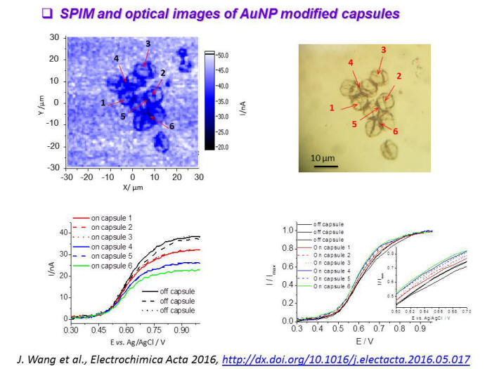 SPM and optical images of AuNP modified capsules
